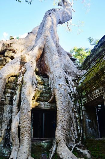 Ancient temples forgotten in time Temple Angkor Wat Ta Prohm Cambodia