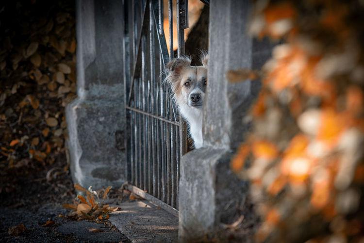Portrait of dog sitting by gate