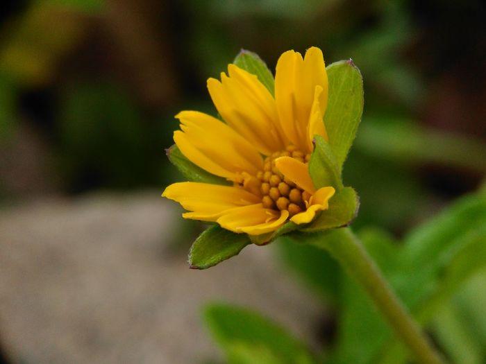 a flower Flower