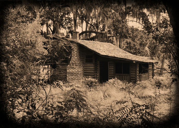 Located in a Florida swamp, this old cabin gives a glimpse of what life was like many years ago. Chimney Classic Old School Retro Swamp Architecture Beauty In Nature Building Exterior Built Structure Cabin Day Empty Florida Forest Growth House Nature No People Outdoors Overrun By Nature Scenics Sepia Tree Vintage