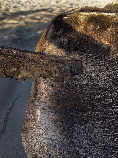 Perspective Views Scenic Landscape #Nature #photography Nature Photography Landscape Shapes In Nature  Abstract Nature Nature Drift Wood  Beach Beach Photography Sand Driftwood Oregon Coast Beachphotography Oregon Scenic View Landscape Photography Patterns In Nature On Driftwood