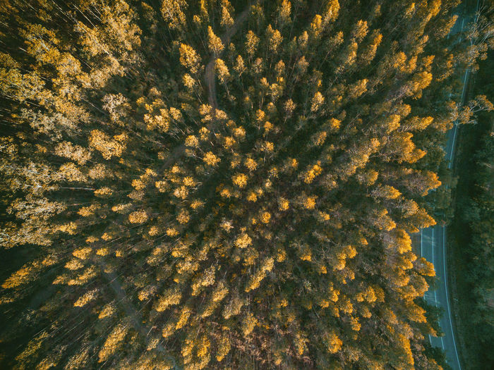 Aerial view of autumn trees