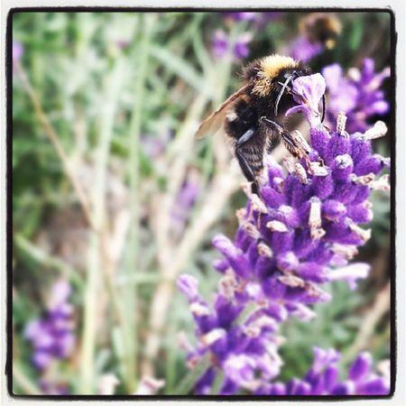 Bee Busybee
