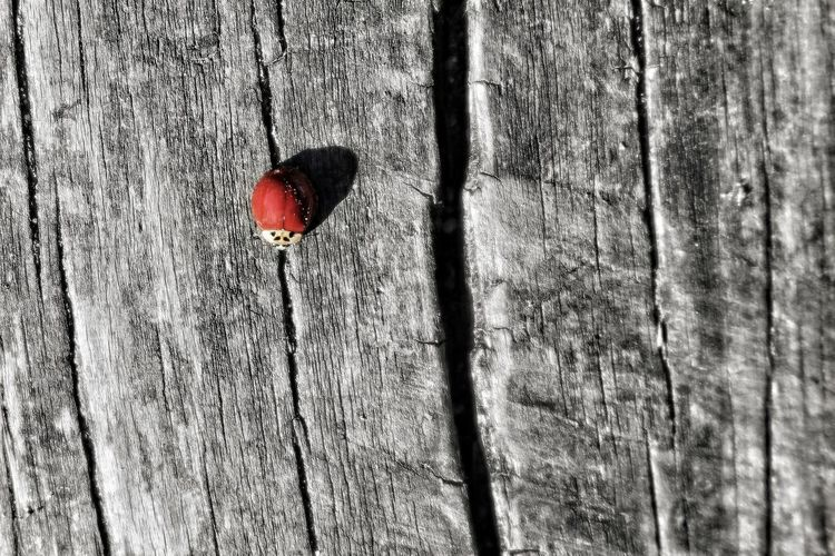 Close-up of red heart shape on tree trunk against wall