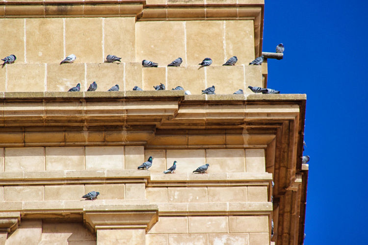Animal Themes Animal Wildlife Animals In The Wild Architecture Bird Blue Building Exterior Built Structure Clear Sky Day Low Angle View Nature No People Outdoors Perching Spread Wings
