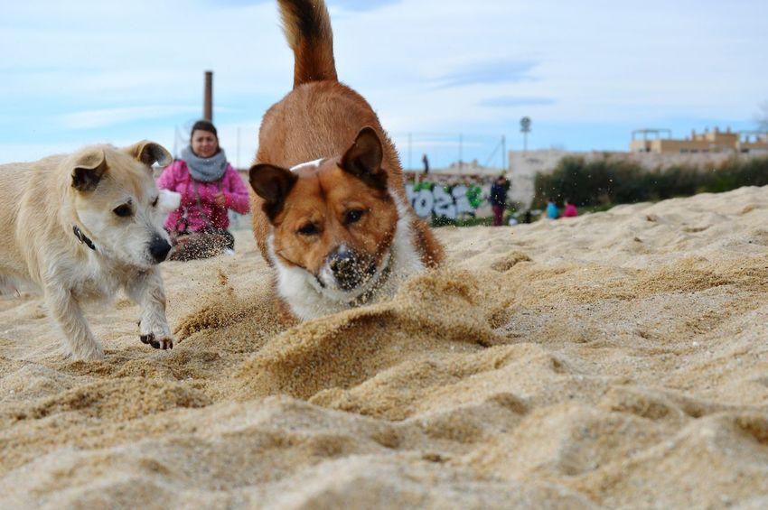 EyeEm Selects Pets Beach Dog Sand Friendship Portrait Sky Golden Retriever Puppy Canine Panting Retriever Cavalier King Charles Spaniel Leash Pet Collar Inner Power Go Higher EyeEmNewHere