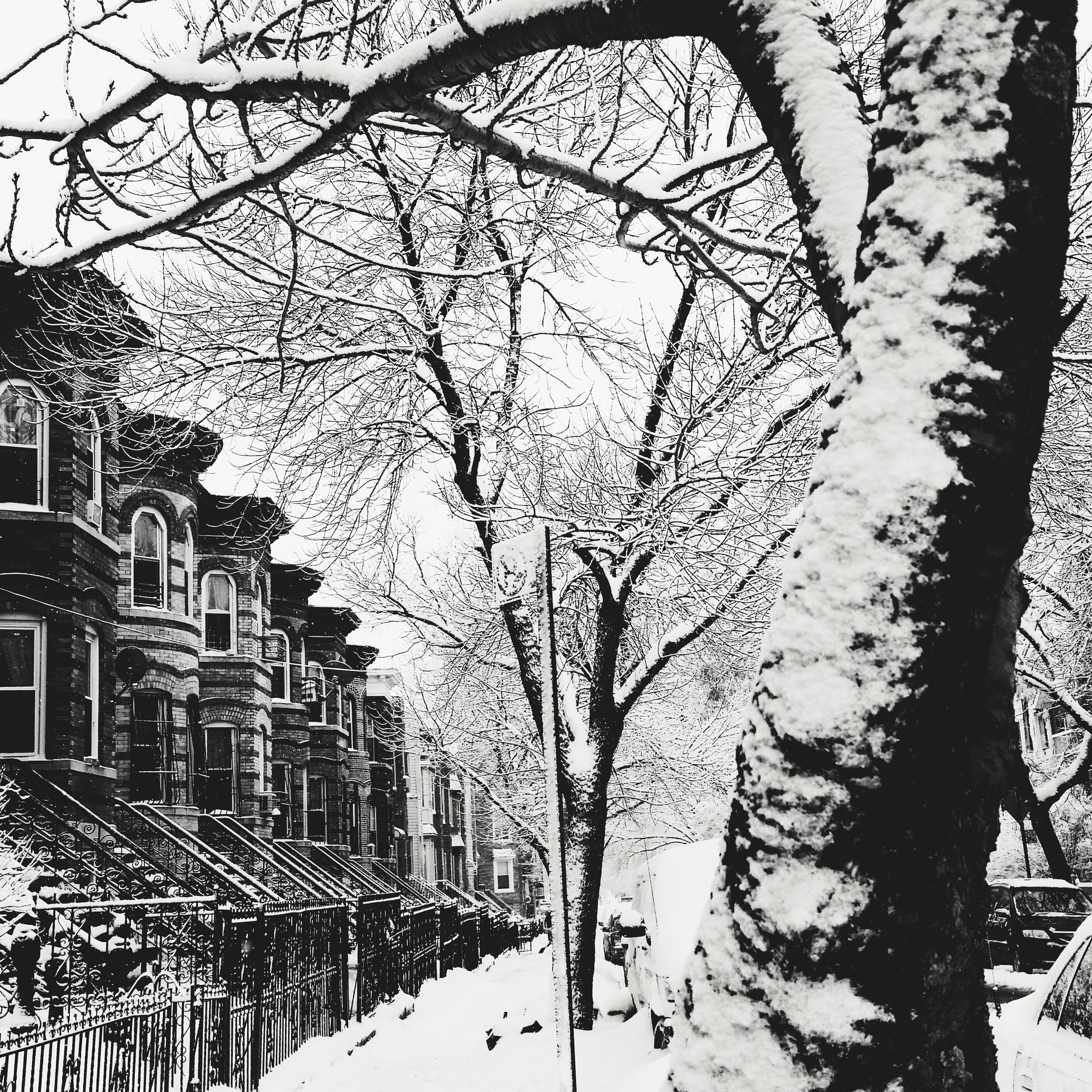 snow, winter, cold temperature, building exterior, architecture, built structure, bare tree, season, tree, weather, city, branch, covering, sky, building, residential structure, day, residential building, outdoors, street
