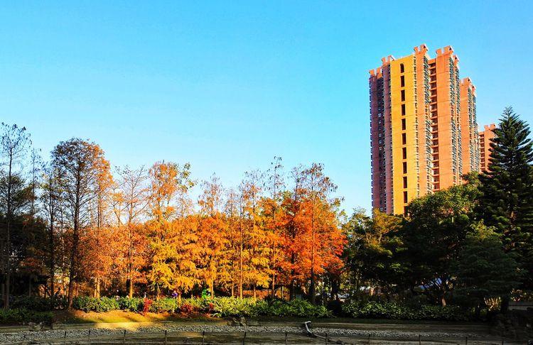 Tree Nature Photography Colour Tsing Yi HongKong