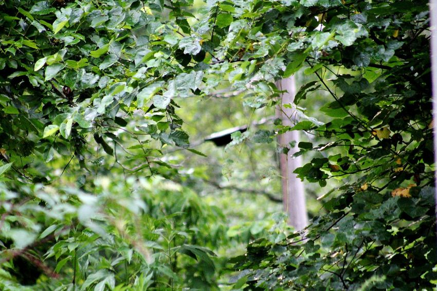 a view through Trees Tree Square Tree Bird Branch Leaf Green Color