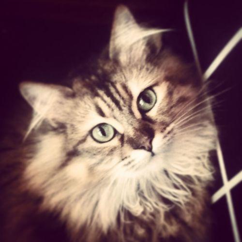 Love My Beautiful Cat