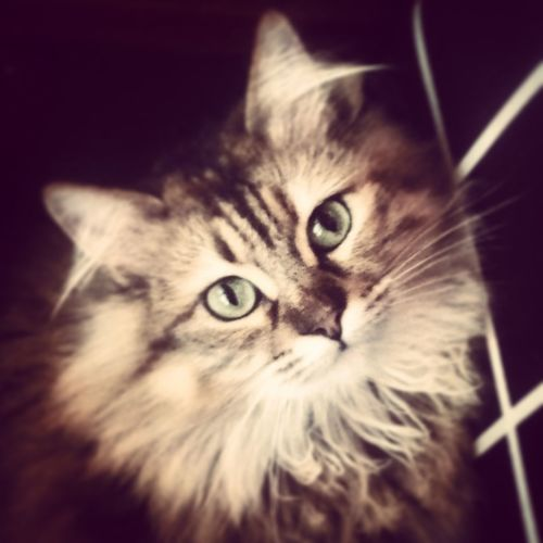Your So Cute Cat