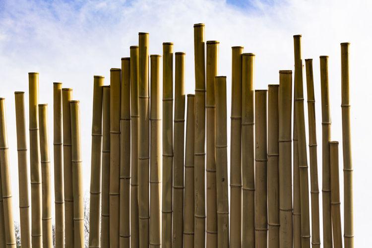 Bamboo Japan