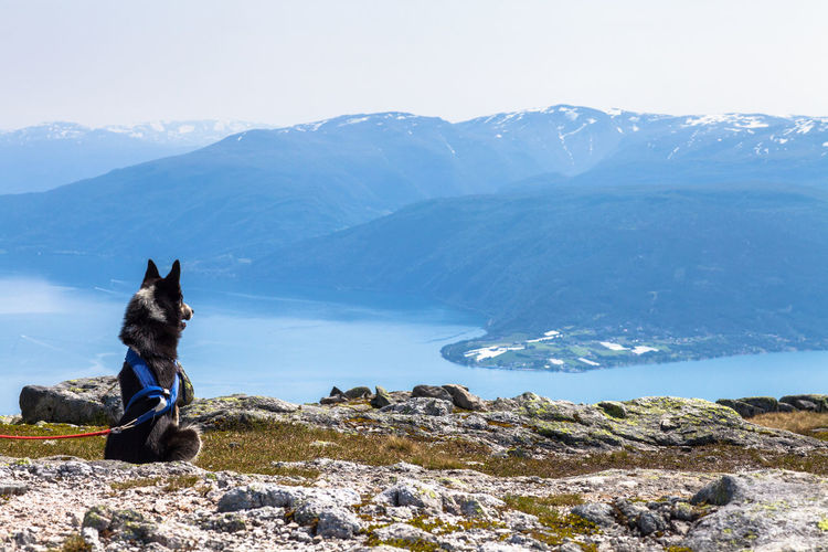 Rear View Of Dog Sitting On Cliff By River And Mountains Against Sky