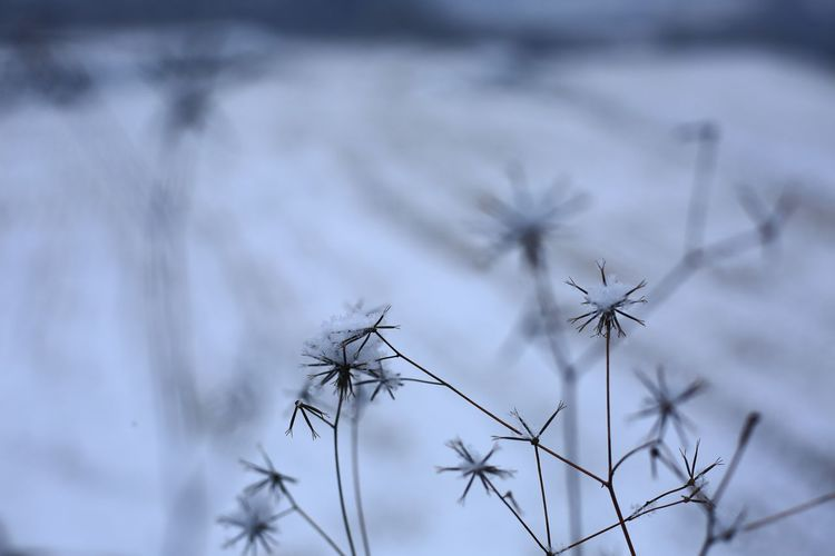 Close-up of dry plant against sky during winter