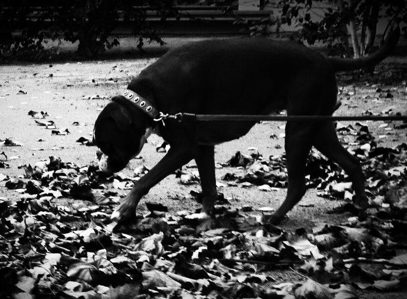 Dogs Blackandwhite Streetphotography