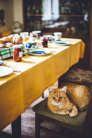 High Angle View Of Cat Sitting On Chair By Dining Table At Home