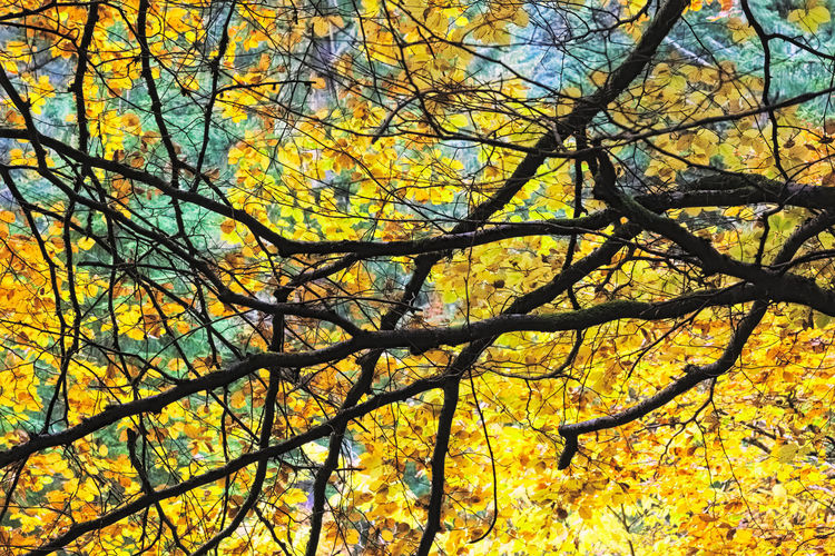 Lines and leaf textures - Autumn colours, Reelig Glen. Abstract Autumn Beauty In Nature Colours Nature Outdoors Scotland Tranquility Tree Yellow Scotland 💕 Highlands Colour Of Life Colourful