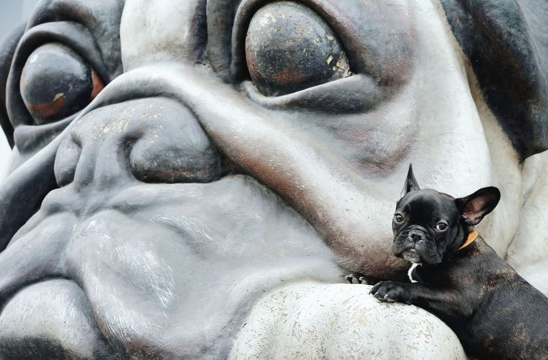 False idol. Dog Dogs Frenchie French Bulldog Frenchbulldog One Animal Statue Huge Looking At Camera Pets Portrait Close-up Bulldog Sculpted Idol Canine Puppy