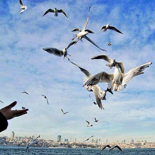 istanbul Citylife Birds Martilar Sea City Turkey Sky Clouds トルコ 土耳其 турция турецкий Traveling мечеть праздник аксарай птица Travel イスタンブール Bulut құс птицы теңізде туристік Mardas