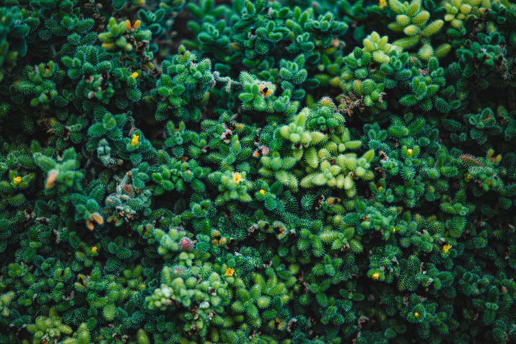 High angle view of plants growing on plant