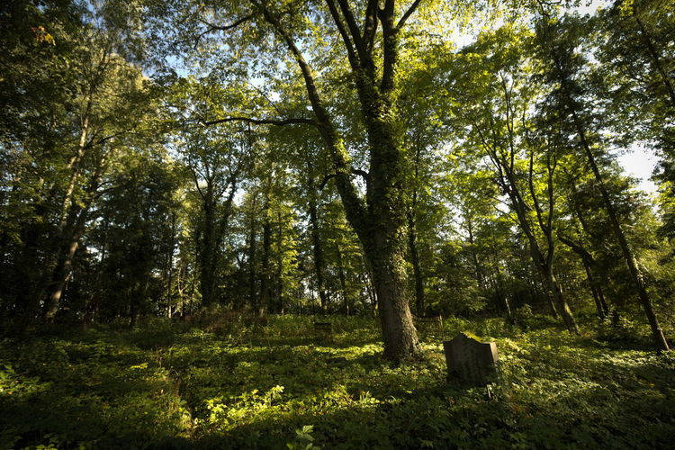 Cemetery Day Grass Green Color Masuren Masuria Mazury No People Old Outdoors Tree Wide Angle