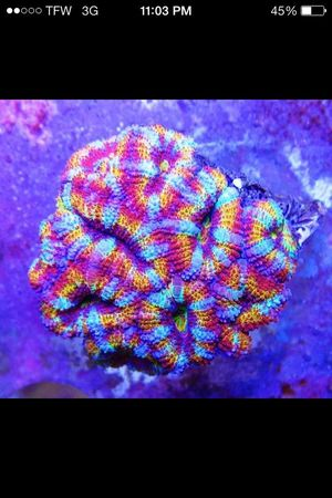 Ocean In My Living Room Salt Life Check This Out Rainbow Acan
