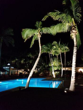 Nature Swimming Pool Water No People Palm Trees Illuminated Nightshot Night Sky