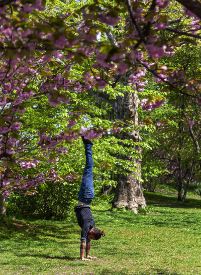 handstand in central park Handstand In Central Park Exersize Outdoors Handstand  Calisthenics Acrobatics  Humor