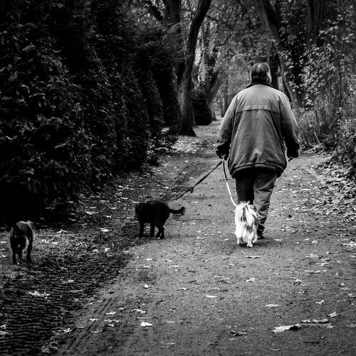 Where my dogs at? :) Hanging Out Taking Photos Park Dogs Walking Man Dog Walking Old Man Autumn Leaves B&w Street Photography Trees Streetphotography Everybodystreet Sony taken with Sony Nex6. Telling Stories Differently The Street Photographer - 2016 EyeEm Awards Found On The Roll
