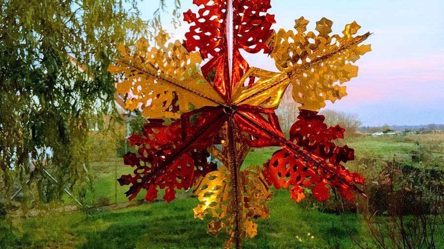Gold-Rot Stern am Fenster, dahinter der freie Blick in unsere Dorfgärten. Nature