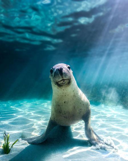 Sea lion puppy love
