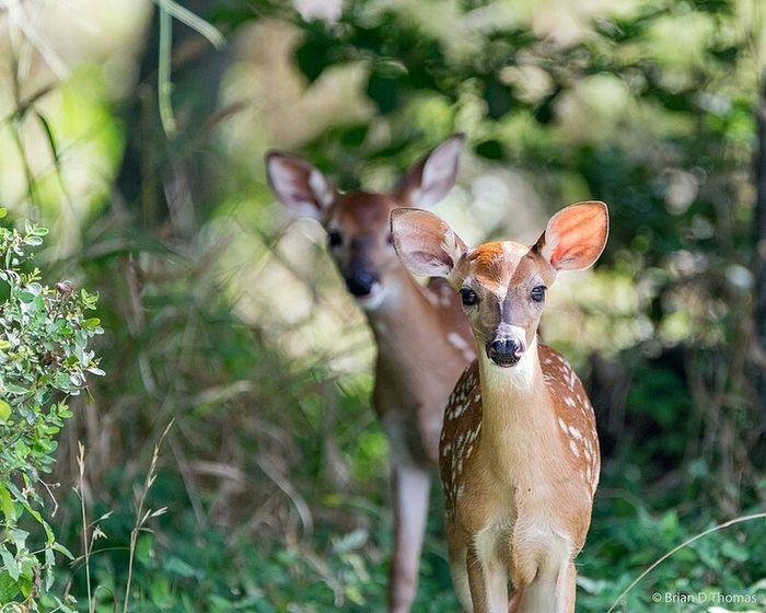 Couple of spots Fawns Deer White Tail Deer First Eyeem Photo