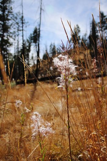 Kelowna,BC Canada Canada150 British Columbia British Columbia, Canada Nature Dried Plant Close-up Outdoors Plant Beauty In Nature Late Summer Colours Late Summer Nature Focus On Foreground