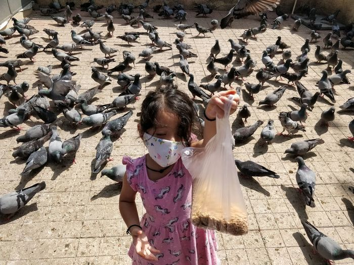 High angle view of girl with birds in background