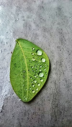 Raindrops Leaf Leafporn Leafs Photography Nature Green Leaf Water On Leaf After The Rain Leafmania Nature Photography Nature_collection Nature On Your Doorstep Naturelovers Nature_perfection Nature Textures Minimalism Minimalist Minimal The Week On EyeEm Perspectives On Nature