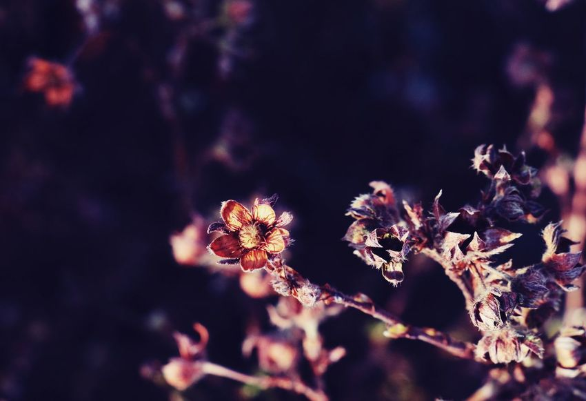 Nature_collection Plants 🌱 Wintertime Macro Naturelovers Macro Nature Nature Flower No People Plant Outdoors