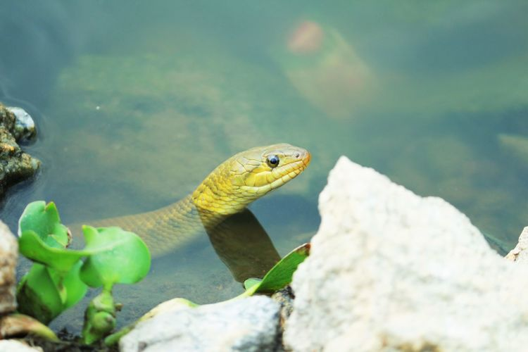 #Eyes #small River #Snake Animal Head  Close-up Green Color Nature Outdoors Wildlife