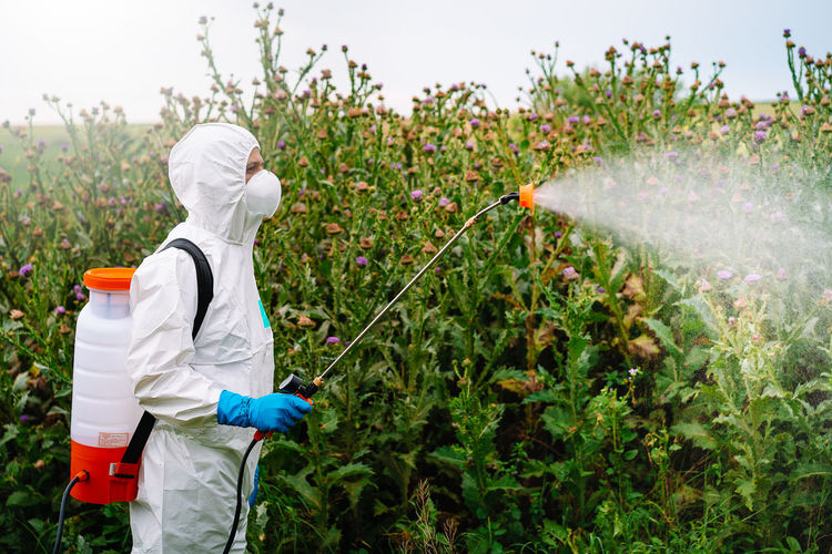 Person in protective workwear and mask holding sprinkler and spraying herbicide on land