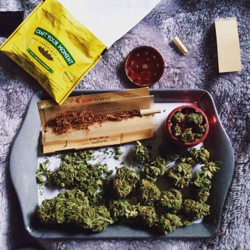 Cannabis Weed Spliff Zoot Marijuana Mary Jane Smoking Rolling Tobacco Medication Medicated Pain Relief Relaxing