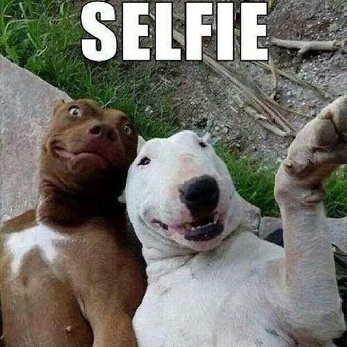 Malek El Selfie