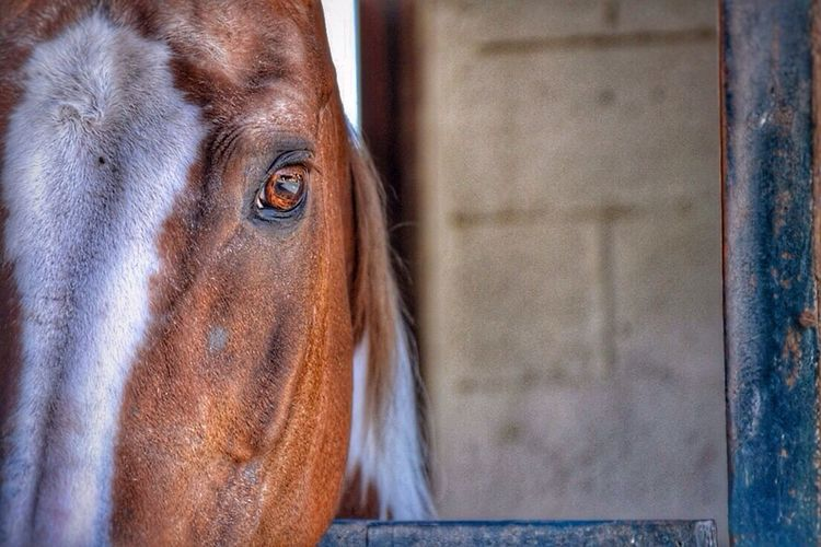 Horseslife Horsesseries Ilovehorses Welovehorses Horses Nikon D3100 Brazilian Gallery Showcase April EyeEm Best Shots Ey4photography EyeEm Gallery Taking Photos Animals