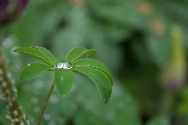 Beauty In Nature Close-up Day Drop Focus On Foreground Fragility Freshness Green Color Growth Leaf Nature No People Outdoors Plant Water Water Drop