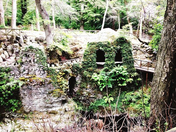 Tollymore Forest Park Game Of Thrones Filming Location Northern Ireland Walking Around Scenery Landscape Green Check This Out