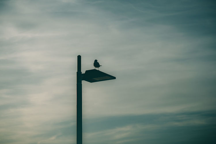 Bird Cloud - Sky Animals In The Wild Animal Themes Animal Wildlife Vertebrate Sky Animal Low Angle View One Animal No People Nature Lighting Equipment Perching Day Silhouette Outdoors Pole Dusk Beauty In Nature