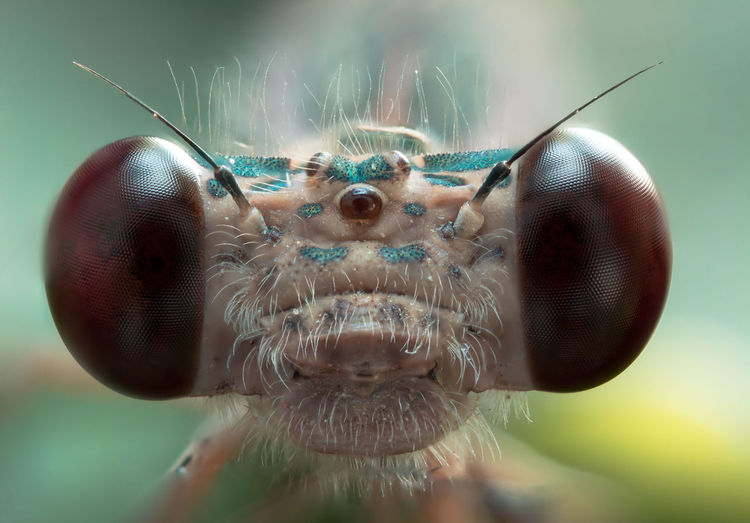 This alien... Animal Animal Antenna Animal Body Part Animal Eye Animal Head  Animal Themes Animal Wildlife Animal Wing Animals In The Wild Close-up Day Extreme Close-up Eye Focus On Foreground Insect Invertebrate Macro Nature No People One Animal Selective Focus EyeEmNewHere