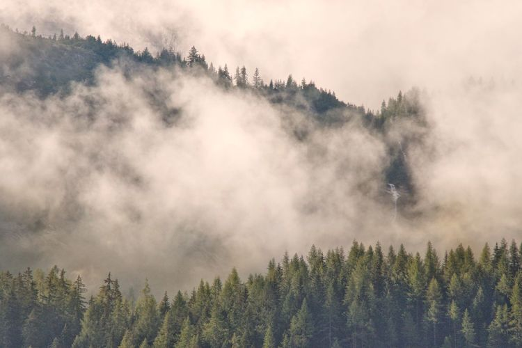 Panoramic shot of pine trees against sky