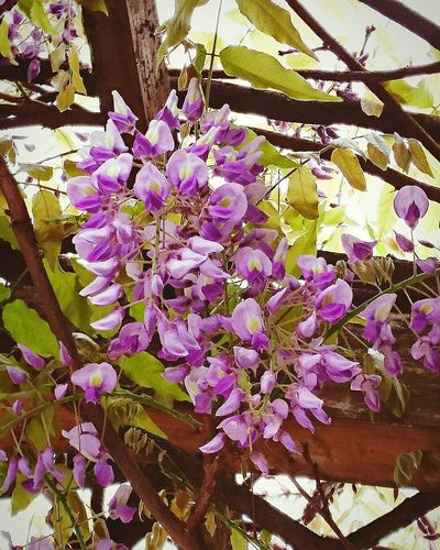 Flower Growth Tree Springtime Freshness No People Day Close-up Flower Head Beauty In Nature フジ