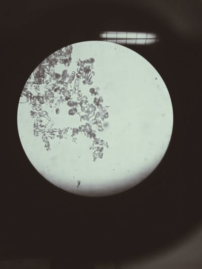 Microscope Nature Bacteria Black Background Bacterial Art Map No People Space Planet - Space Planet Earth Space Exploration Night Astronomy Satellite View Outdoors