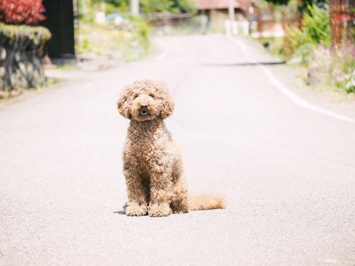 dog EyeEm Selects One Animal Animal Themes Animal Mammal Domestic Pets Dog Road Sitting