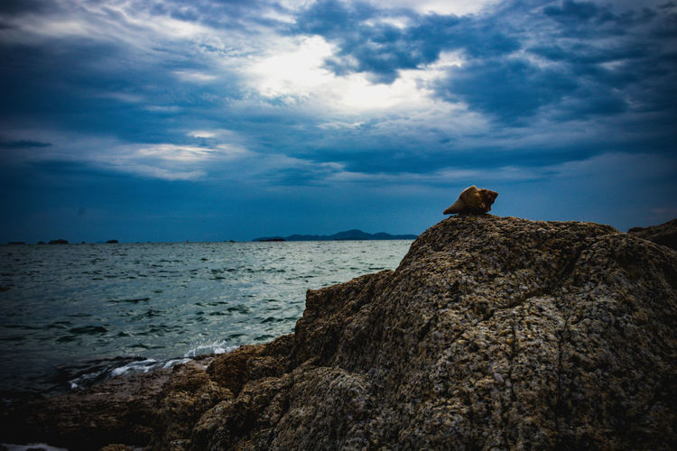 Scenic view of rock on sea shore against sky